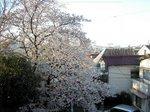 桜200604